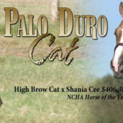 PALO DURO CAT